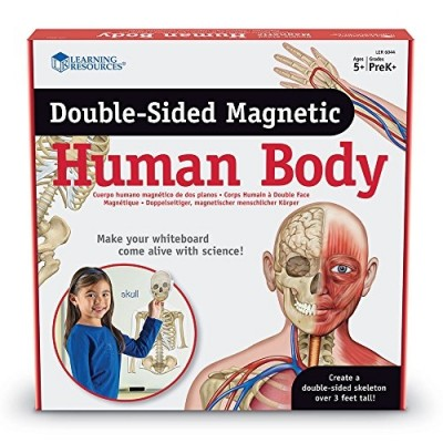 LEARNING RESOURCES Double-Sided Magnetic Human Body